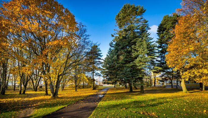Yellow Park Hanko, Finland, October 2016